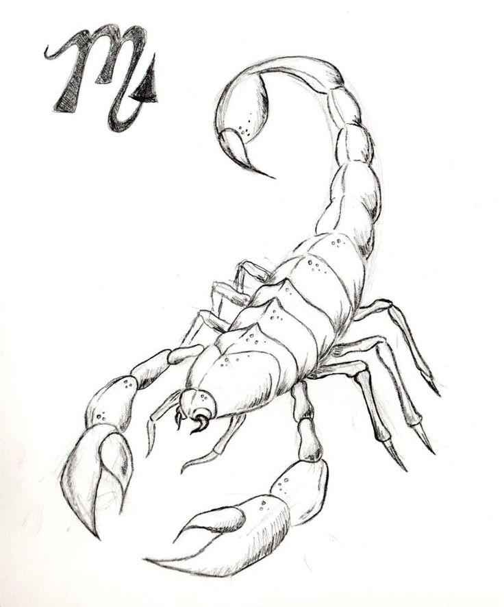 природы абсолютно скорпион фото рисунок тату скандинавские руны