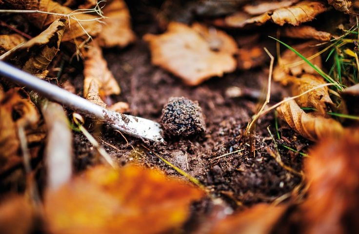 """This package is based in Valnerina, the Valley of Nera river which runs from the small town of Norcia to Marmore Waterfall. This is a district of wild nature, beautiful landscapes, delicious food products and ancient traditions. You will have the chance to enjoy an interesting and amusing """"truffle hunt"""".  #dreavel #trufflehunting #cacciaaltartufo #cascatamarmore #marmorefalls #discoverumbria #discoverferentillo #tourism #toursinumbria #umbria #hiddentreasures #igersitalia"""
