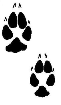 72 Best Images About Animal Tracks On Pinterest