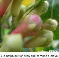 é o botão de flor seco que compõe o cravo, como o conhecemos.