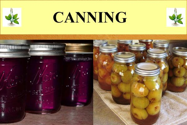1000 images about canning on pinterest common sense water bath canning and low sugar - Advice making jam preserving better ...