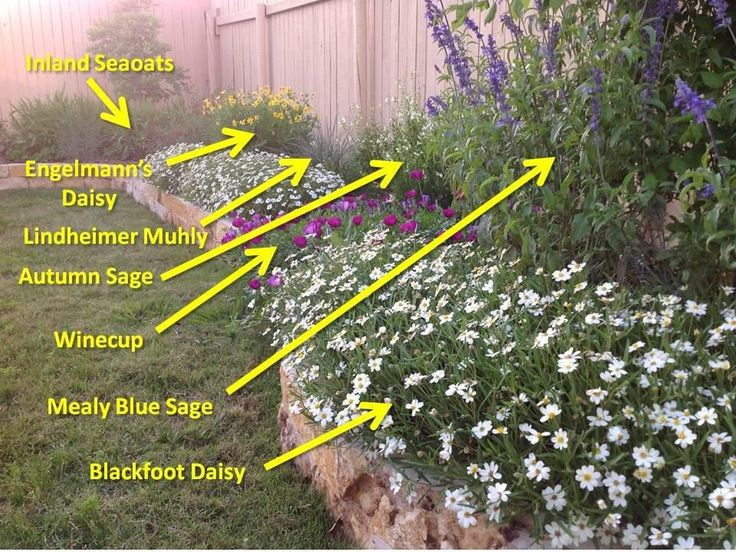 25 best Drought tolerant garden ideas on Pinterest
