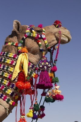 tassels on camels...how much better can it get!!!??? Happy Birthday Boo!