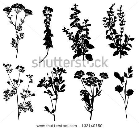 Collection of silhouettes of spicy herbs