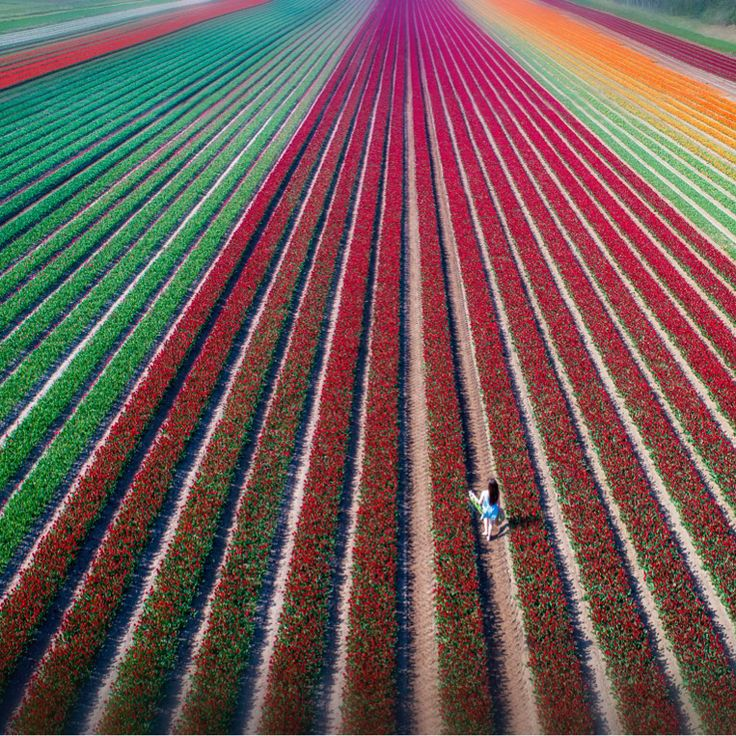 """Some beautiful examples of spring colours around the UK featured in today's paper.  Tulips bloom in East Winch, Norfolk. Rob Howarth / Albanpix  Sunrise over Tuesley Farm, Surrey. Picture by Alamy  Finally the """"Pink moon"""" captured over the Severn crossing, Ben Birchall @pa  #weather #colour #inthepaper #UK #Nature #spring  via ✨ @padgram ✨(http://dl.padgram.com)"""