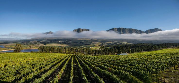 Private guided tour to the best coastal wine estates that the picturesque Hemel en Aarde Valley has on offer.