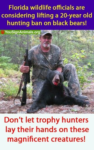 """a report on black bear hunting and animal rights Nature magazine reports that """"the effect on and the world wildlife fund are pro–sport-hunting, or at why should animals have rights read more general."""