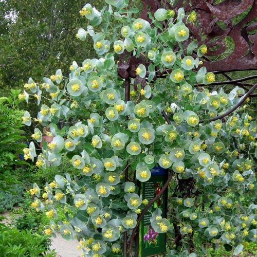 Landscaping With Honeysuckle : Pin by regan kaplan on home garden