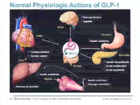 Incretin-Related Therapies: Glycemic Control and Beyond - YouTube