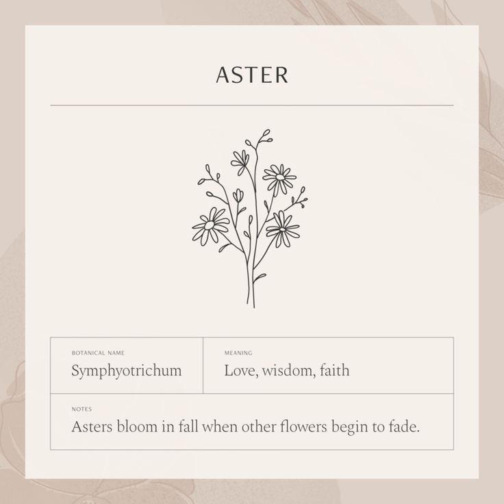 Pin By Janet On Galleria Xo In 2020 Birth Flower Tattoos Aster Flower Tattoos Aster Tattoo