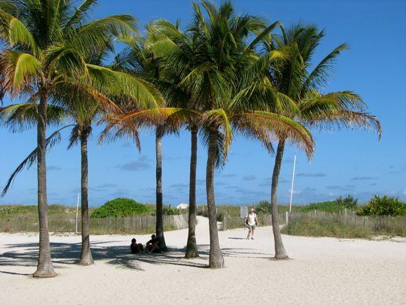 65 Besten Palm Trees Bilder Auf Pinterest