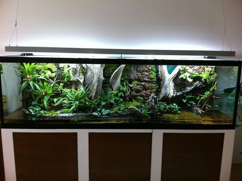 23 Best Green Tree Python Enclosures Images On Pinterest