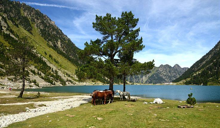 Dans le Parc National des Pyrénées, le Lac de Gaube - - Par CRT Midi-Pyrénées / Patrice THEBAULT  #TourismeMidiPy #MidiPyrenees #France #Pyrénées #Randonnée #Walking #trekking #hiking #gaube #hautespyrenees #lake #lac