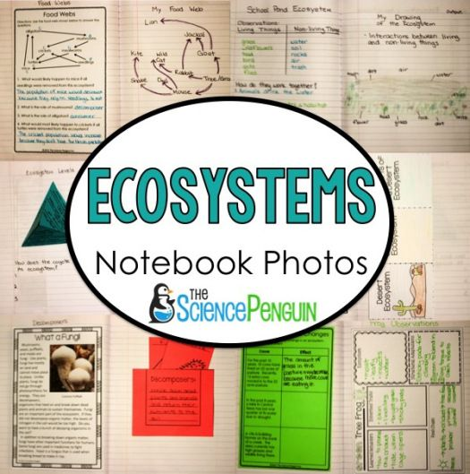 LOTS of Ecosystems Science Notebook Photos (paid resources and lesson ideas)-- The Science Penguin