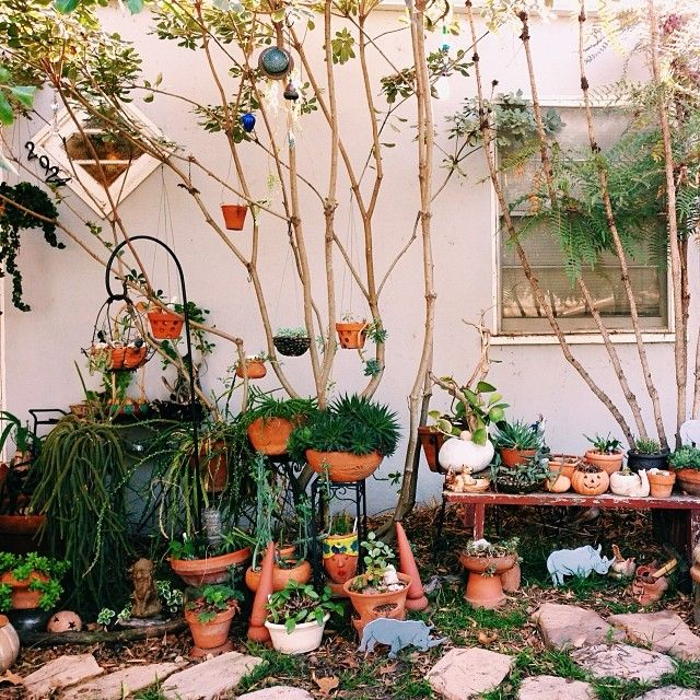 amazing little potted garden  (if you like my pins, you'll love my 'grams! Follow along @justinablakeney !)