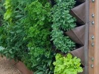 Green wall systems are the ultimate space saving crop containers and create a tapestry of foliage and fruits. Plants can be watered and fed by hand, or a irrigation system can be installed.