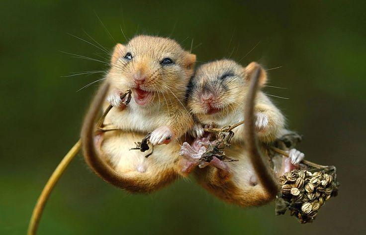 25 pictures adorables dans l'intimité des souris sauvages