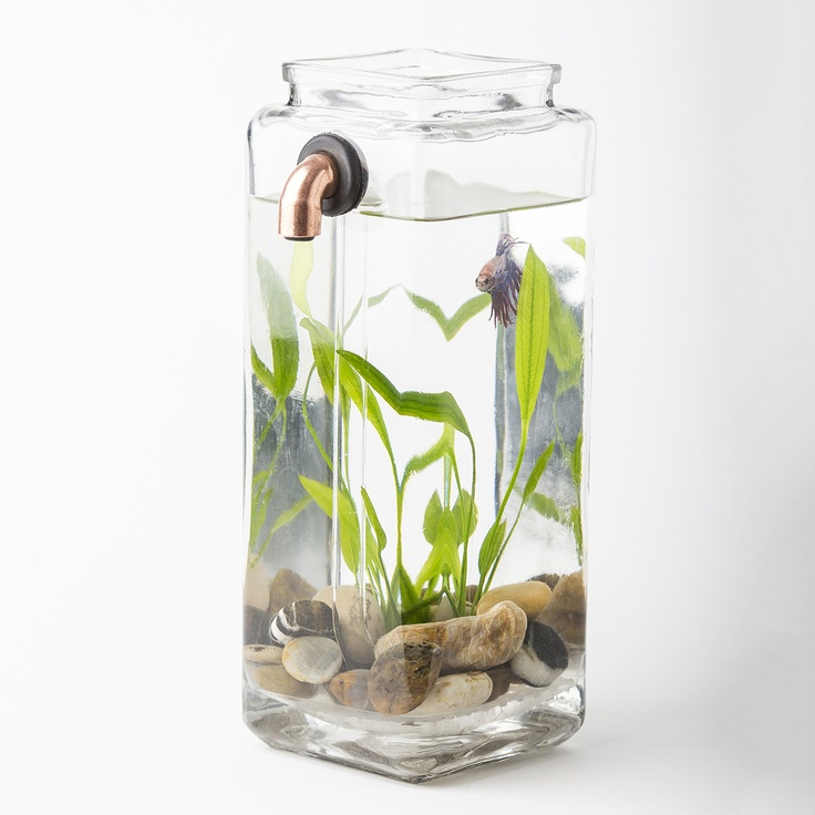 Fab.com | Self Cleaning Betta Aquarium