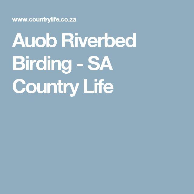 Auob Riverbed Birding - SA Country Life