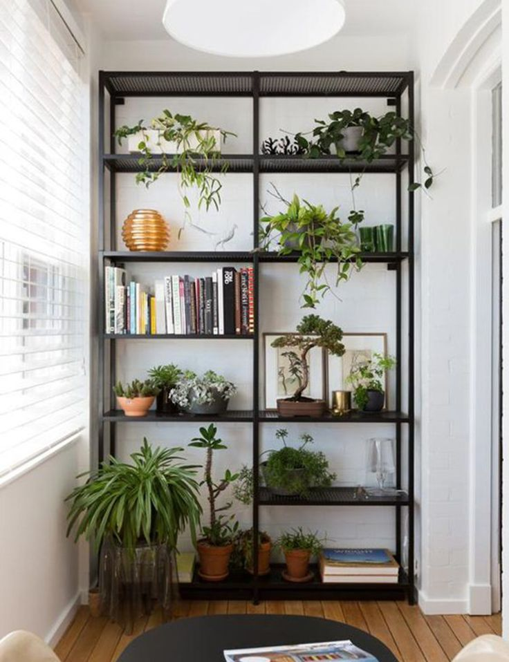 25 best ideas about tall shelves on pinterest kitchen storage racks kitchen racks and - Nice indoor plants ...