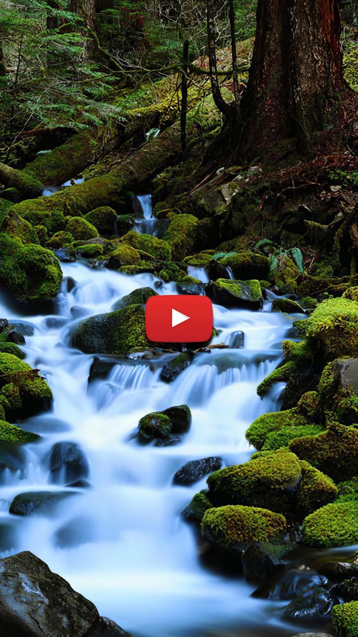 Forest Stream Photography Water Stream Aesthetic Forest Stream Landscape Live Wallpapers Live Backgrounds Wallpaper