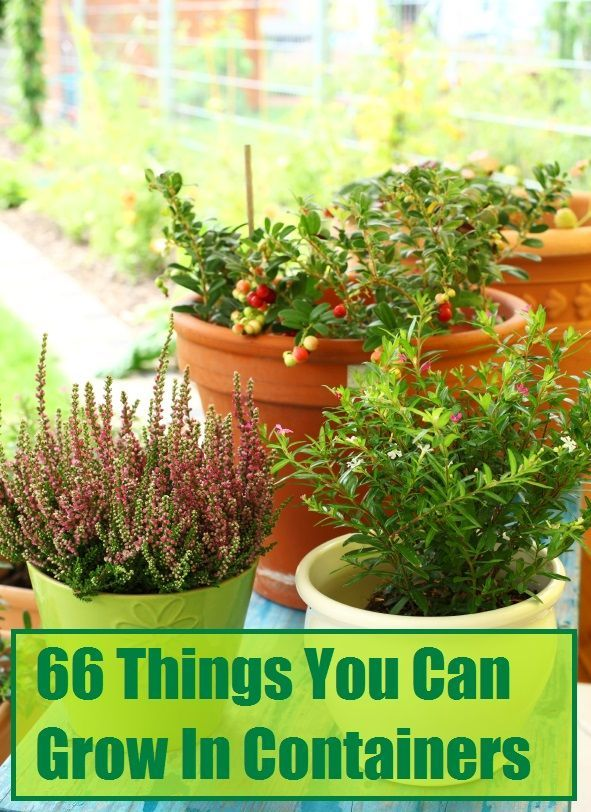 66 things you can grow in containers tree fruits citrus for What plants can i grow indoors