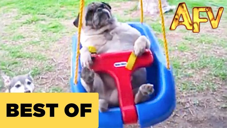 Very Funny Videos: Funny Animal Videos - Over 13 Minutes Of Hilarious And Cute Animal Moments - Check out Best Funny Videos & Jokes from Youtube, Facebook, Vine, Twitter, etc. Let's Laugh Out Loud http://alotfunnyvideos.com/post/150905814407/funny-animal-videos-over-13-minutes-of-hilarious