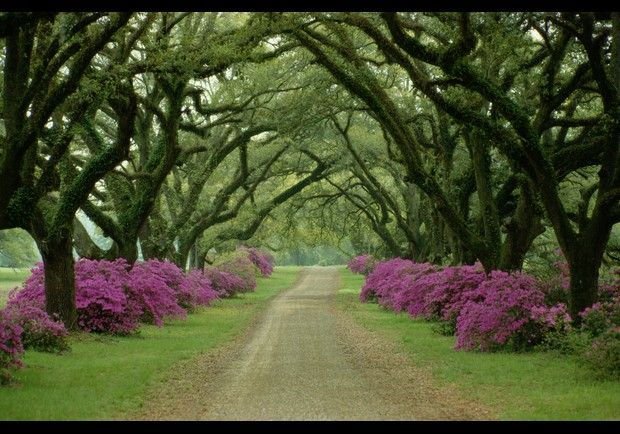 "Sometimes nature can do all the work, like in this stunningly simple tree-lined plantation driveway south of Vicksburg, Mississippi, ""which charms with its rich colors,"" and also uses symmetry and geometry for dramatic impact. All the drama here is provided by the variety and placement of vegetation, not in the road itself. Gentle curves that often give driveways their elegance, but here the gracefully arching yet bold trees and the straight road directs the eye. ""The twin rows of trees and…"
