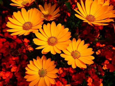 Você não precisa de produtos químicos perigosos para acabar com os insetos - basta usar estas plantas!