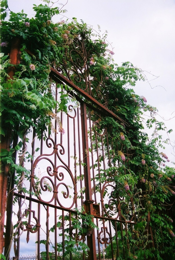 Pin antique garden gates in wrought iron an art nouveau style on - Find This Pin And More On Ironwork