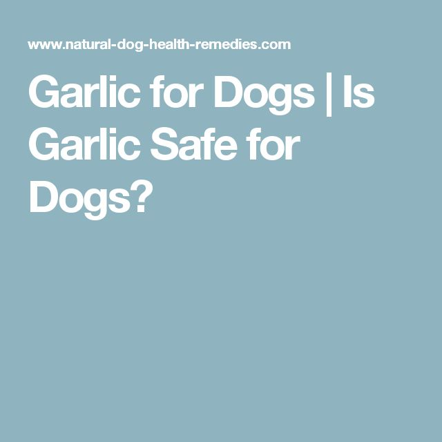 Garlic for Dogs | Is Garlic Safe for Dogs?