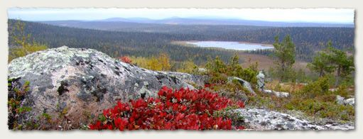 Salla natural surrounds offer trekkers the opportunity to enjoy open fell landscapes, lush riversides, as well as deep forests. There are more than 290 km of hiking and trekking trails in the municipality of Salla.