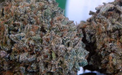 Cherry Pie Cannabis Strain: GDP x F1 Durban