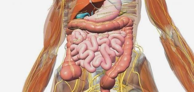 Pin By المجنون موسوعة المحتوي العربي On المجنون موسوعة المحتوي العربي Inside Human Body Gallbladder Human Anatomy Picture
