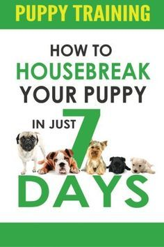Puppy Training: How to Housebreak Your Puppy in Just 7 Days! (puppy training, dog training, puppy house breaking, puppy housetraining, house training a puppy) - http://www.thepuppy.org/puppy-training-how-to-housebreak-your-puppy-in-just-7-days-puppy-training-dog-training-puppy-house-breaking-puppy-housetraining-house-training-a-puppy/