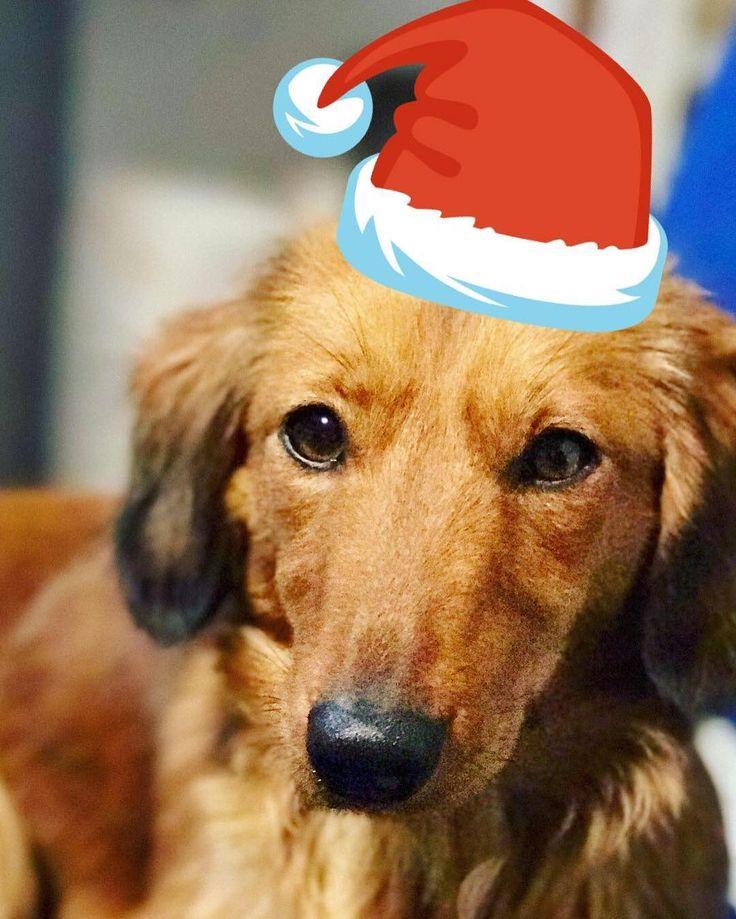 Vesele Vánoce všem