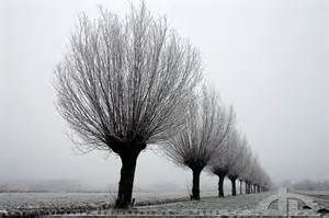 Plus belles photos d'arbres