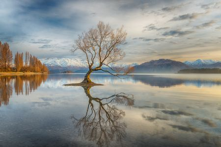 Wanaka Tree Photo by Linda Cutche — National Geographic Your Shot