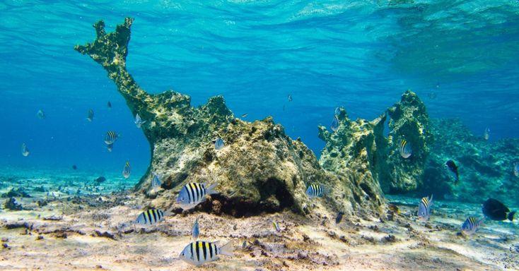 Com mais de mil espécies de peixes, o ecossistema marinho é um dos mais ricos em biodiversidade no Brasil. O litoral tem 7000 km de extensão, apresenta paisagens diferentes ao longo da costa, como mangues, dunas, praias, restingas e recifes. Entre eles destaca-se a Reserva Biológica do Atol das Rocas, no Rio Grande do Norte, a primeira unidade de conservação marinha do Brasil, criada em 1979. A maior parte dos demais ecossistemas ainda é desprotegido e desconhecido pela comunidade…