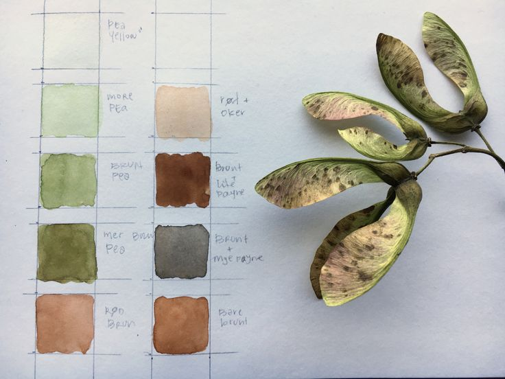 studying the colors of the world – or to be more precise: (and a little less pretentious) the colors of winged maple seeds (samaras) this is where I start – a twig of winged maple seeds…
