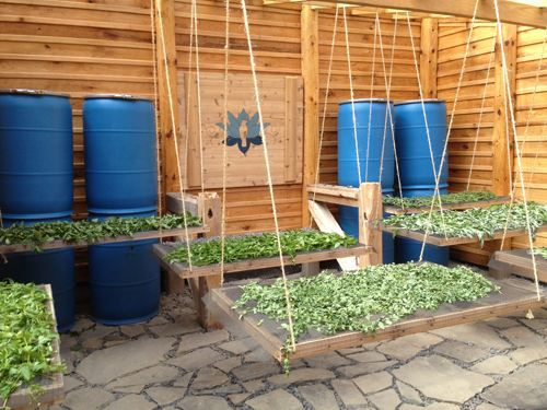 Greenhouse Converted to Drying House