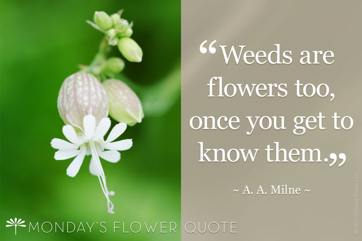 182 Best Monday's Flower Quote Images On Pinterest