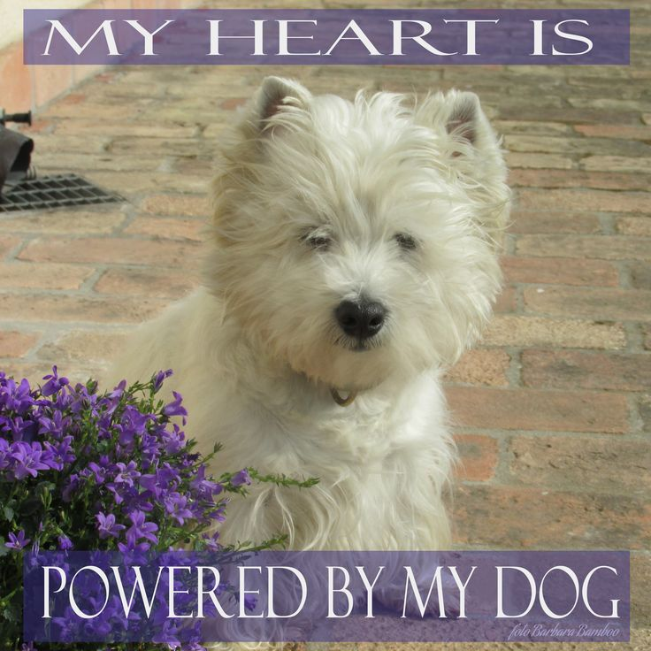 my #dog. She is the owner of my heart.