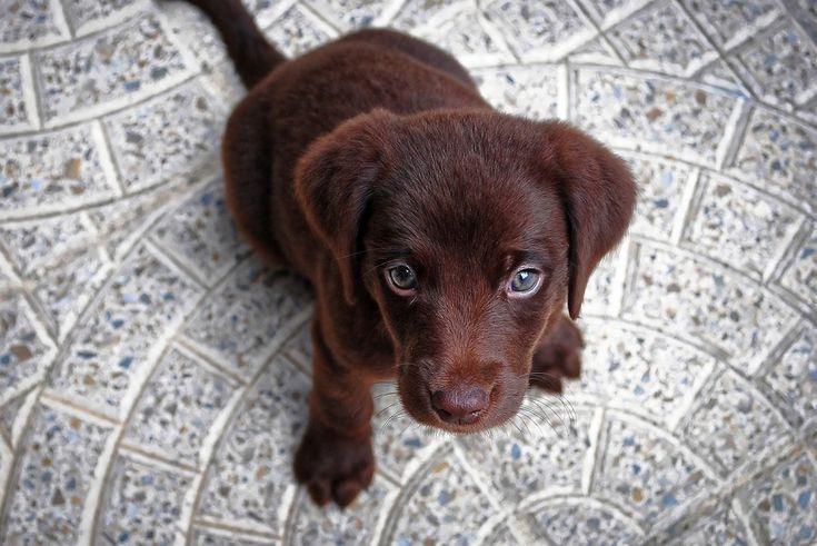 Dal 2017, a Boston, sarà vietato vendere cuccioli all'interno dei negozi di animali. Chi vorrà adottare un cane, un gatto, oppure un coniglio potrà...