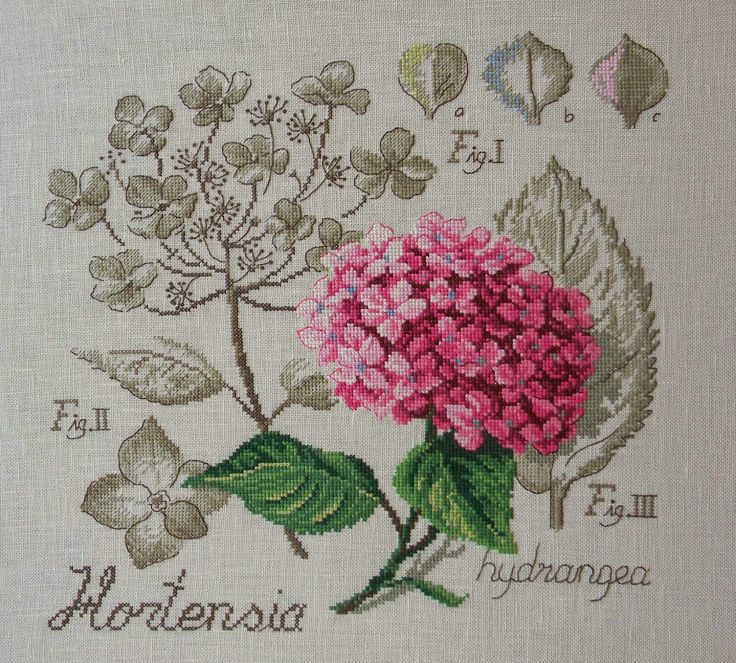 """Résultat de recherche d'images pour """"hortensia véronique enginger"""""""