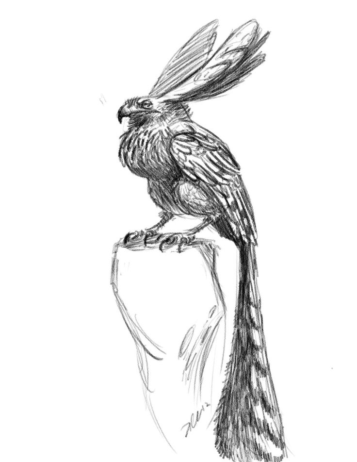 The Art Of Character Design With David Colman Download : Best creature design bird of prey images on pinterest