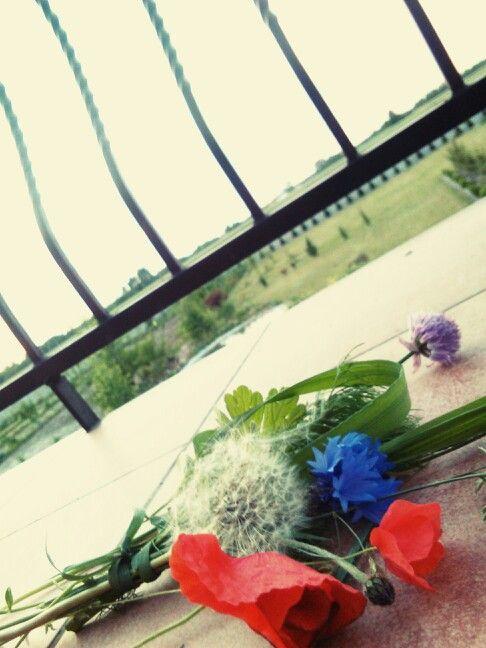 Wiosenny bukiet polnych kwiatów. Mlecz, haber, mak, źdźbła trawy i innych zielonych roślin, fioletowy kwiat kwitnącego kopru. Mieszanka z pospolitych roślin a jakże niepospolita.