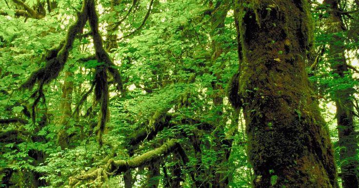 Características especiales de los biomas de selva tropical. El bioma de selva tropical es uno de los biomas más diversos y productivos del planeta. Los bosques lluviosos tropicales proporcionan el 40 por ciento del oxígeno en la Tierra a pesar de que sólo cubren aproximadamente el 6 por ciento de la superficie terrestre. El bioma se caracteriza por las cascadas y las especies de hoja perenne. ...