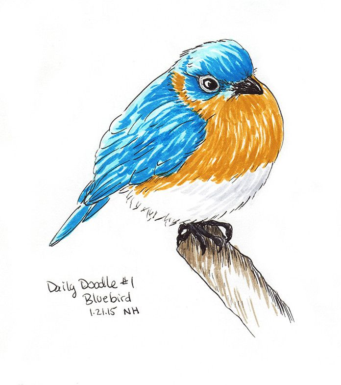 No.001 Bluebird