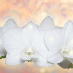 Pentru ca esti o prietena deosebita si o mama minunata, aduci bunatate si dragoste in viata tuturor, iti doresc sa ai parte numai de fericire, de Ziua Femeii si intotdeauna! http://ofelicitare.ro/felicitari-de-8-martie/de-ziua-femeii-491.html
